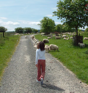 farm holidays counting sheep
