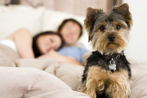 dog-friendly country cottages online